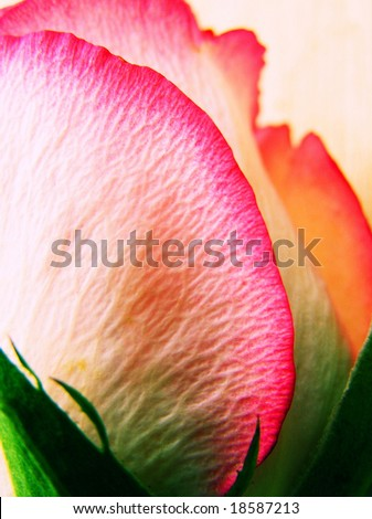 cross process reproduction showing a bright multicolored, textured angled rose