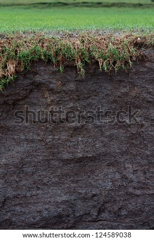 cross section of a salt marsh field with exposed soil following coastal erosion or landslide - stock photo