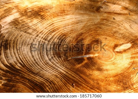 Cross section of a very old tree with countless tree rings demonstrative of age. Background texture image. - stock photo