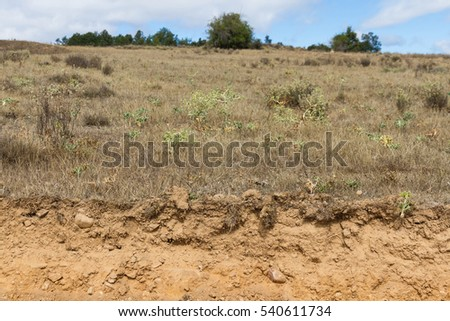 Cross Section of Clay Land in Summer Landscape