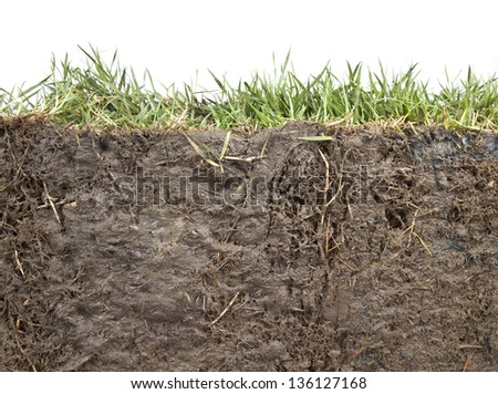 cross section of grass and soil against white background - stock photo