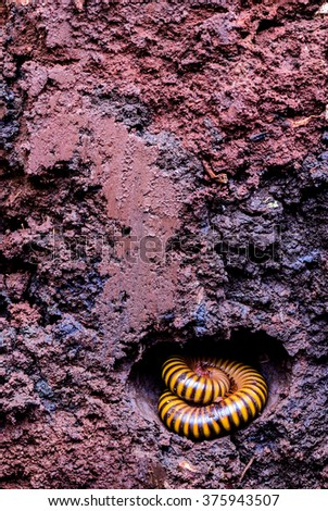 Cross section of Millipede underground soil layers beneath
