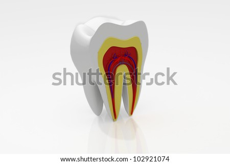 cross section of teeth - stock photo
