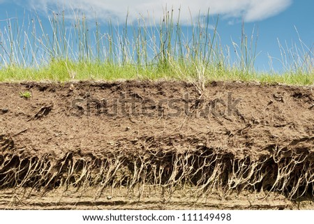 Cross section of the earth with roots and layers of dirt on a summer day - stock photo