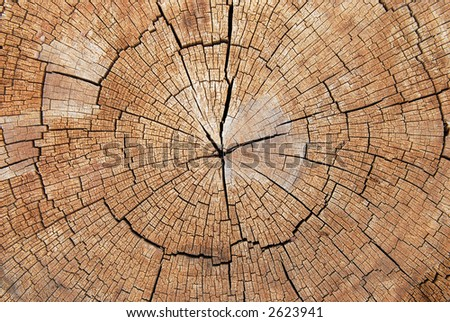 Cross-section of the old tree - stock photo