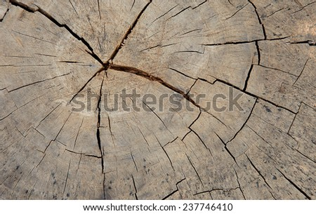 Cross section of the old tree or dead wood - stock photo