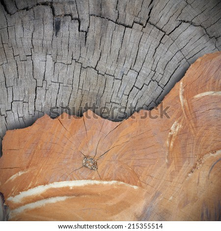Cross section of the old tree or dead wood old VS new - stock photo