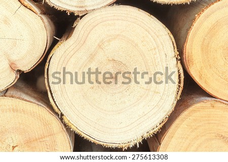 Cross section of the timber, firewood stack for the background - stock photo