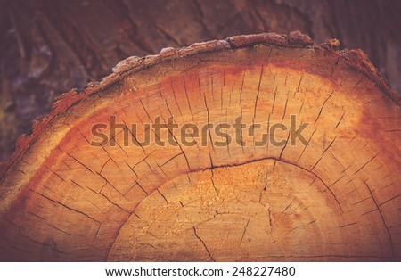 Cross section of tree - stock photo
