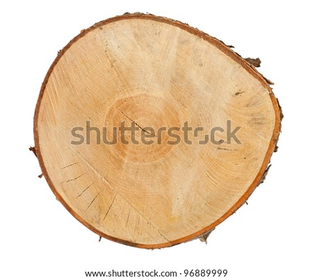 Cross section of tree stump isolated on white background - stock photo