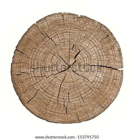 Cross section of tree trunk showing growth rings on white background. log. timber wood.  - stock photo