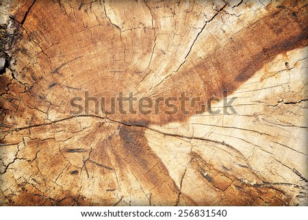 Cross section of tree trunk textured background - stock photo