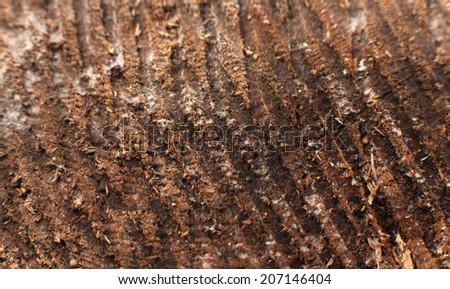 Cross section of tree trunk   Very Old Wood Background