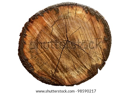 Cross-section wood isolated on white