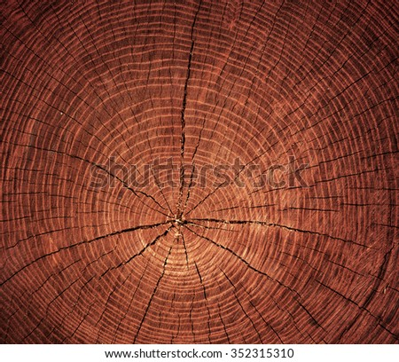 cross-sectional cut of tree - stock photo