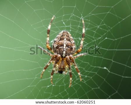 Cross Spider (Araneus diadematus) - stock photo