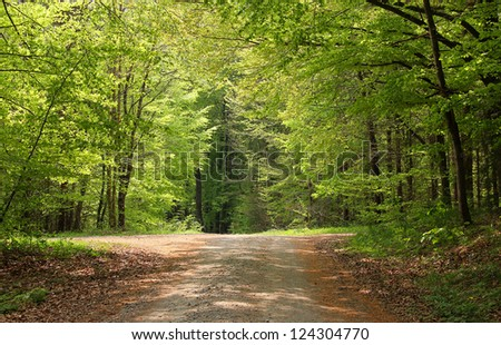 cross way in a beech grove with light and shadow, springtime naturally background - stock photo