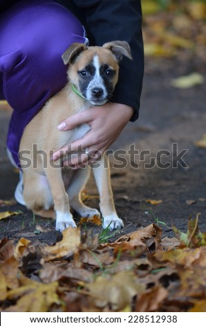 Crossbreed dog - stock photo