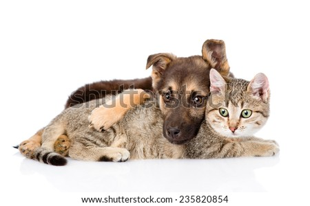 crossbreed dog hugging tabby cat. isolated on white background - stock photo