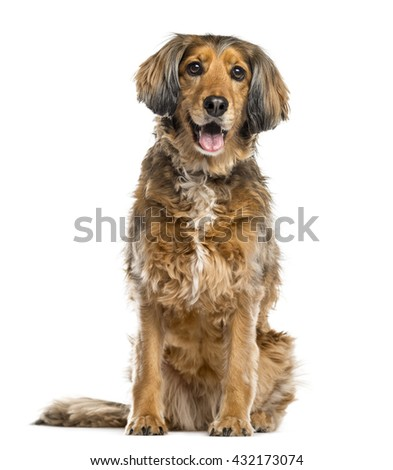 Crossbreed dog sticking the tongue out, isolated on white - stock photo