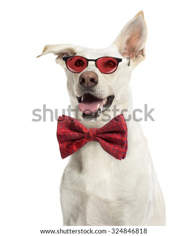 Crossbreed dog wearing glasses and a bow tie against white background - stock photo