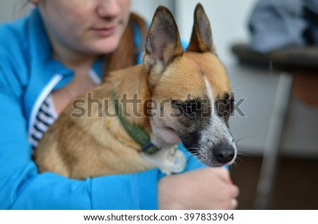 crossbreed small dog