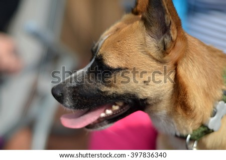 crossbreed small dog with lady - stock photo