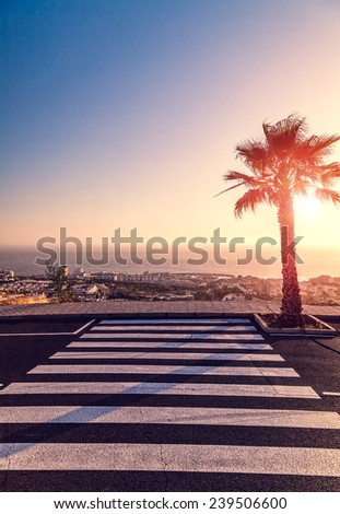 Crosswalk, palm and sunset - stock photo
