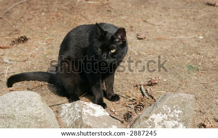 crouching black cat