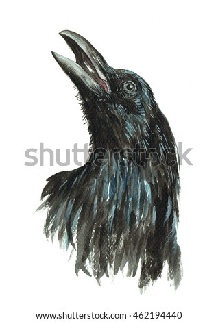 crow isolated watercolor painting on white background crow head wildlife in forest