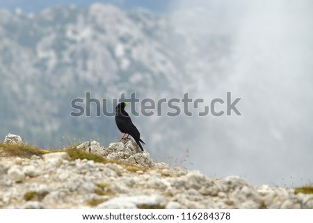 Crow on a mountain cliff - stock photo