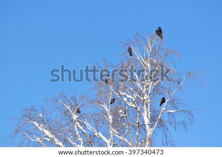 Crow on snowy branch