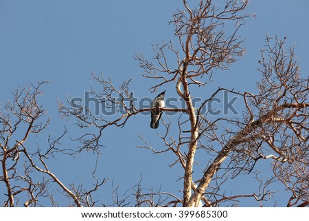 Crow sitting on a tree against the blue spring sky - stock photo