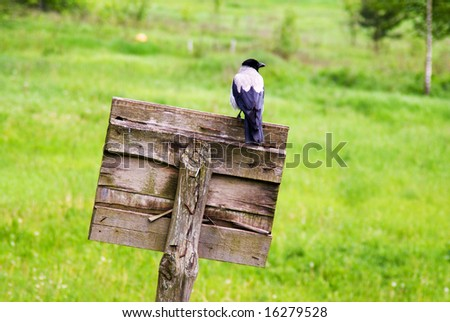 crow sitting on old wooden board - stock photo