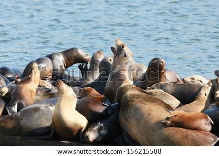 Crowded Dock - stock photo