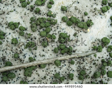 Crowded mushroom like moss with tree root in mangrove forest, Chonburi, Thailand