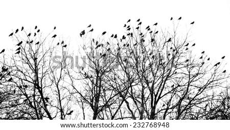 Crowded tree of birds in winter time, Czech Republic - stock photo