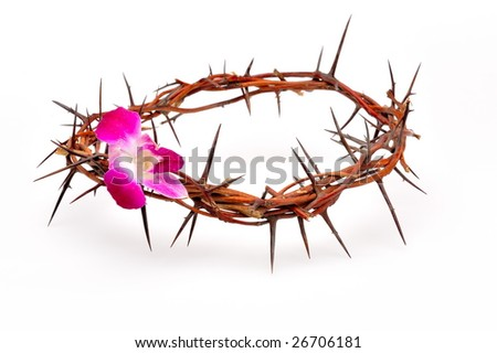 crown made of thorns and flower isolated on white background
