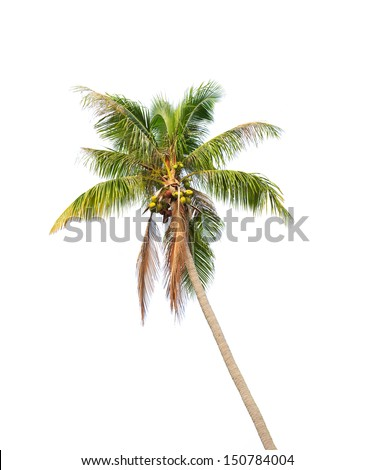 Crown of a palm tree - stock photo