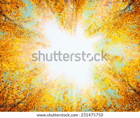 Crown of autumn trees with red yellow leaves against the sky and sunlight , nature background - stock photo