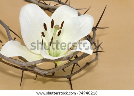 Crown of Thorns and Easter white Lily on  Beige background