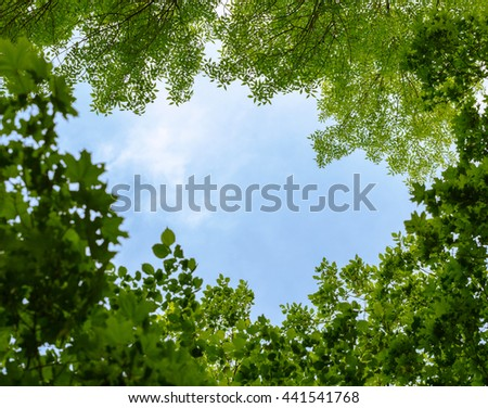 Crowns of maple, ash and elm tree framed blue sky at sunny day,  copy space in center