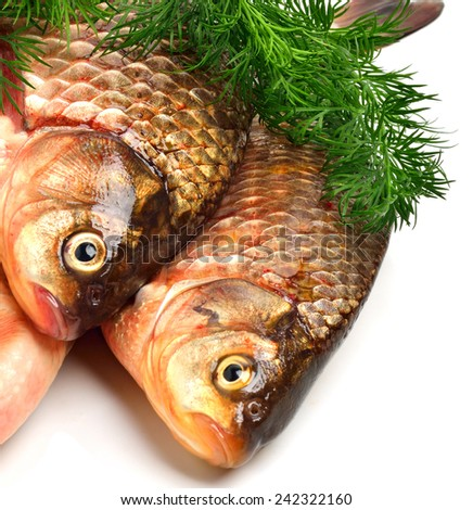 Crucian carp fishes with green dill isolated on white background - stock photo