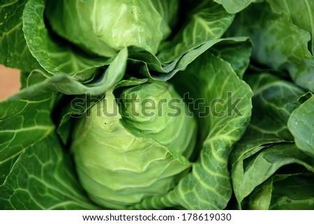 Cruciferous vegetables fresh. - stock photo