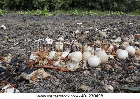 Crushed egg shells recycled as natural organic garden fertilizer - stock photo