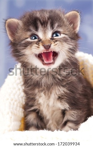 Crying cute kitten in a warm knitted sweater over light blue background - stock photo