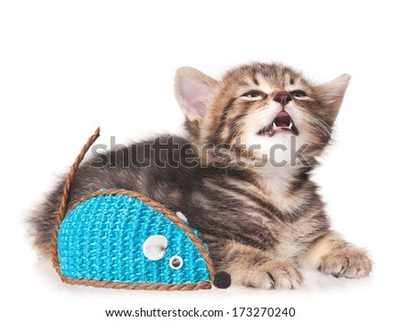 Crying tabby with toy mouse isolated on white background - stock photo