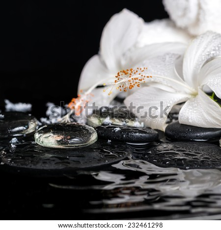 cryogenic spa concept of delicate white hibiscus, zen stones with drops, snow, ice and towels on ripple water, closeup  - stock photo