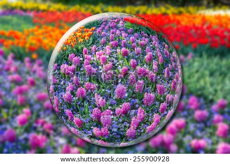 Crystal ball with pink hyacinths and flowers field - stock photo