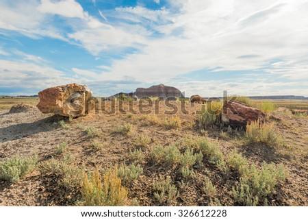Crystal Forest, Petrified Forest National Park, AZ - stock photo